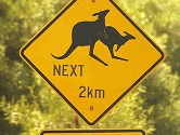 Australian-Kangaroo-Traffic-Sign-----36692