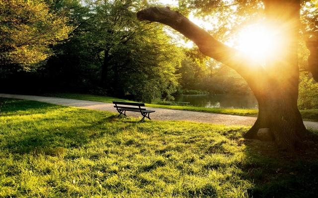 873870-pretty-park-bench-wallpaper